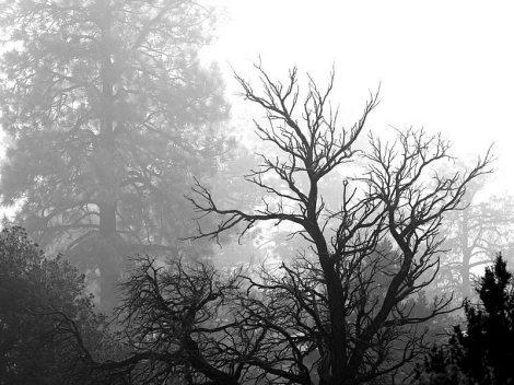 alberodn2.jpg